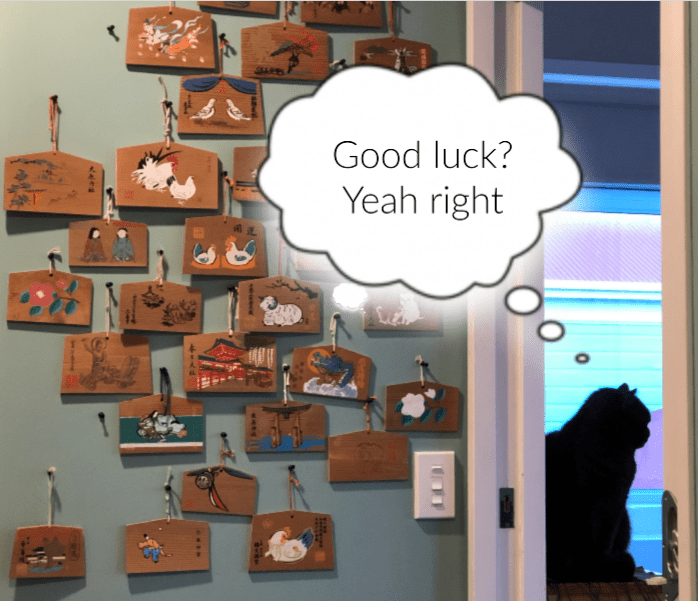 Cat beside a wall covered in good luck votaries, thinks: Good luck? Yeah right