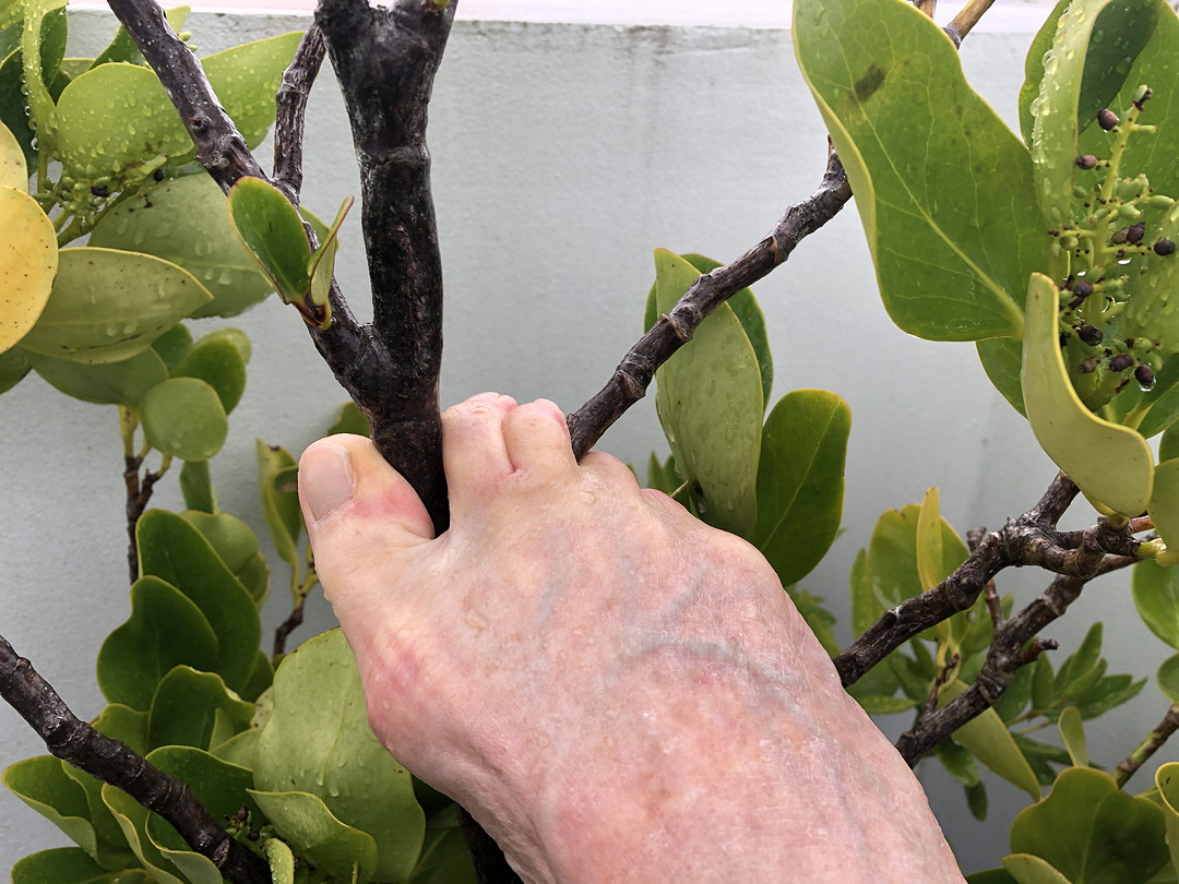 photo of toes grasping the branch of a bush