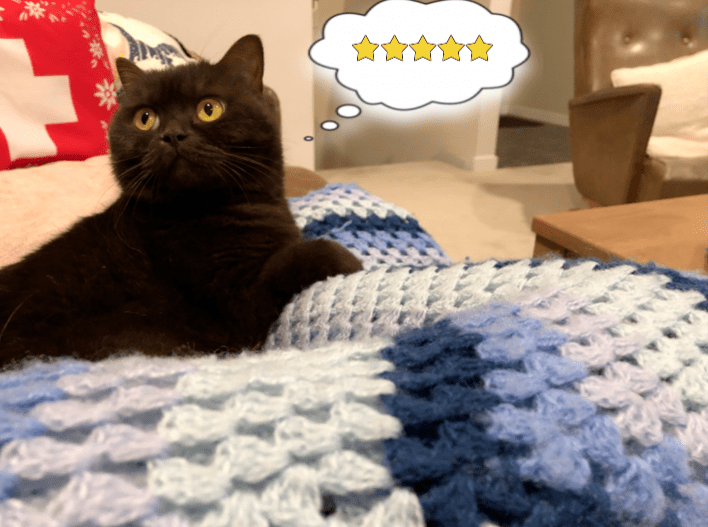 """Cat clawing a crocheted blue blanket thinking """"5 star review""""."""