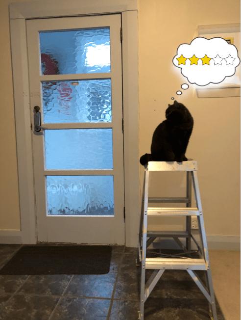 "Cat on stepladder thinks ""3 stars"""