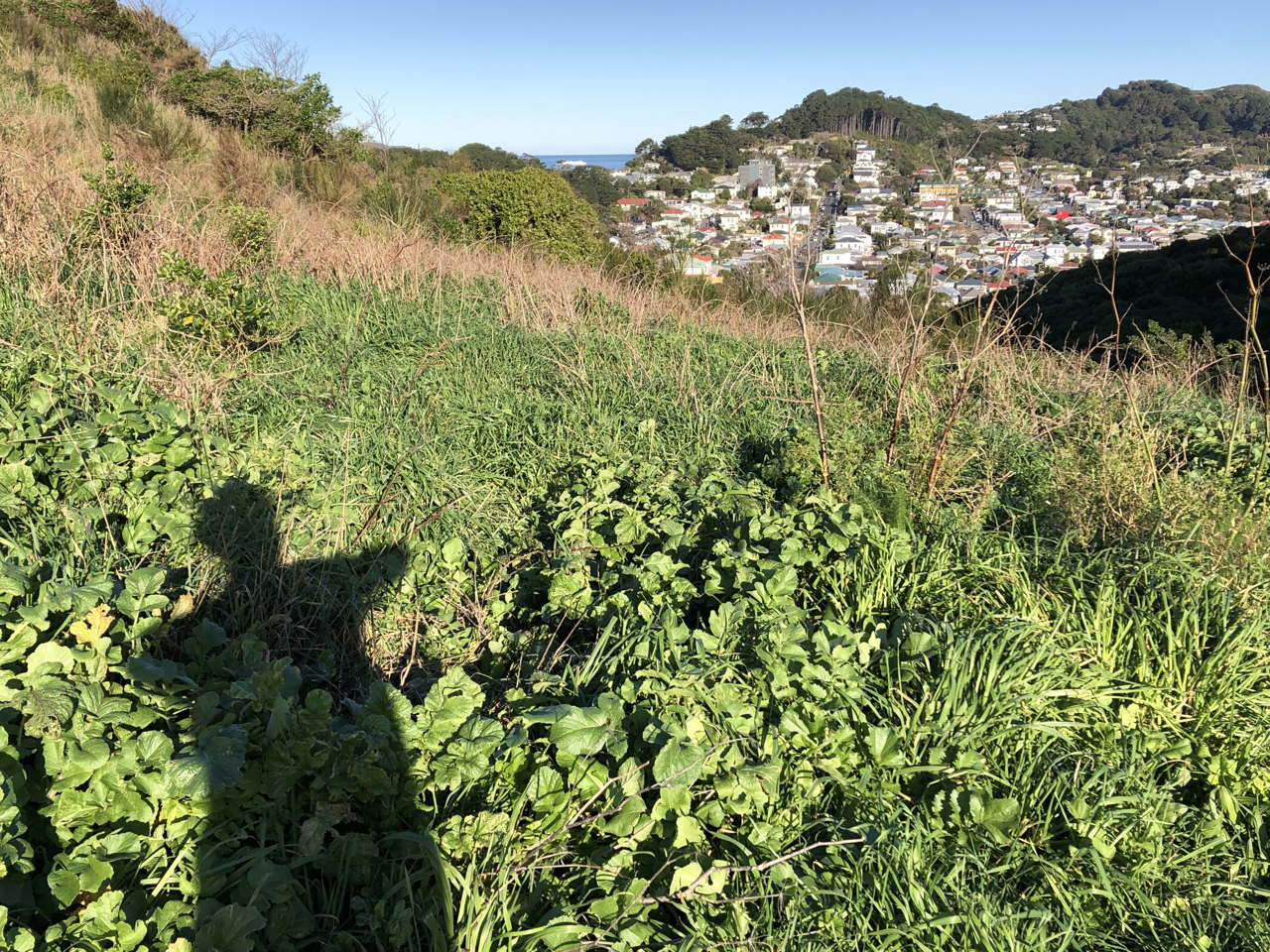 Photo of woman's shadow with elbows raised. Hilly suburb and sea in the background