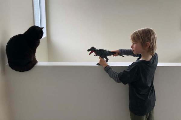 Boy introducing a toy dinosaur to a cat