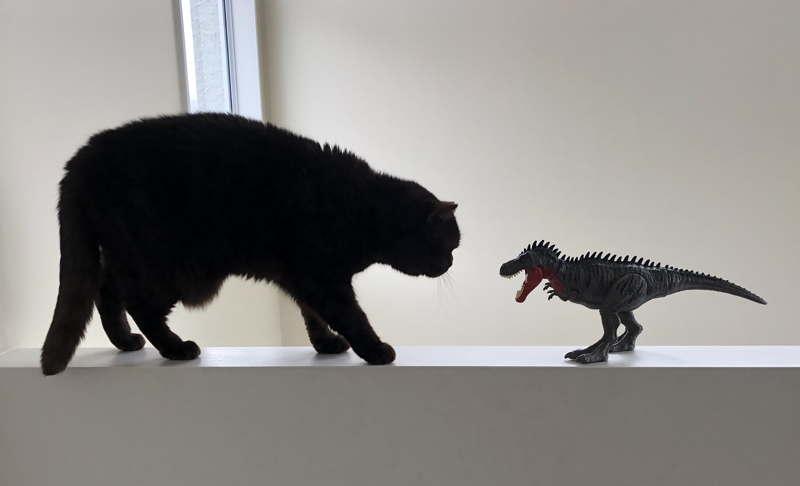 cat examining toy dinosaur