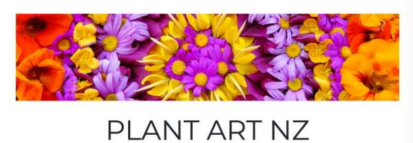 Cover photo of vivid flowers on home page of plantart.nz