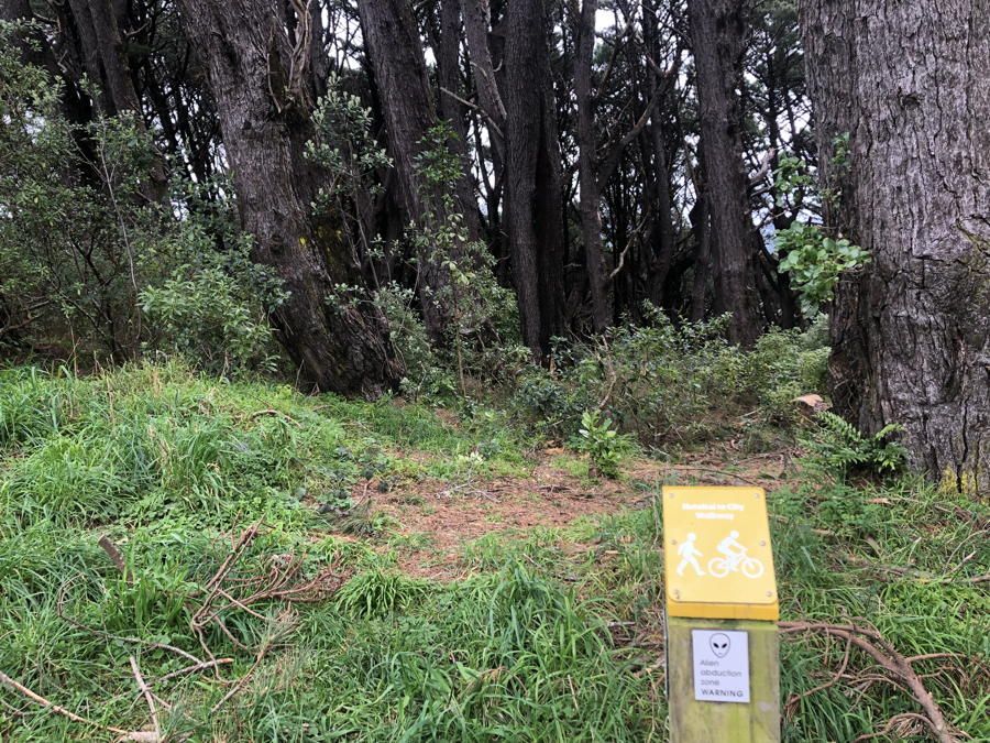 Photo of old, densely growing pine trees with young New Zealand pittosporum, kawakawa, ferns and others. Sign says Alien Abduction Zone.