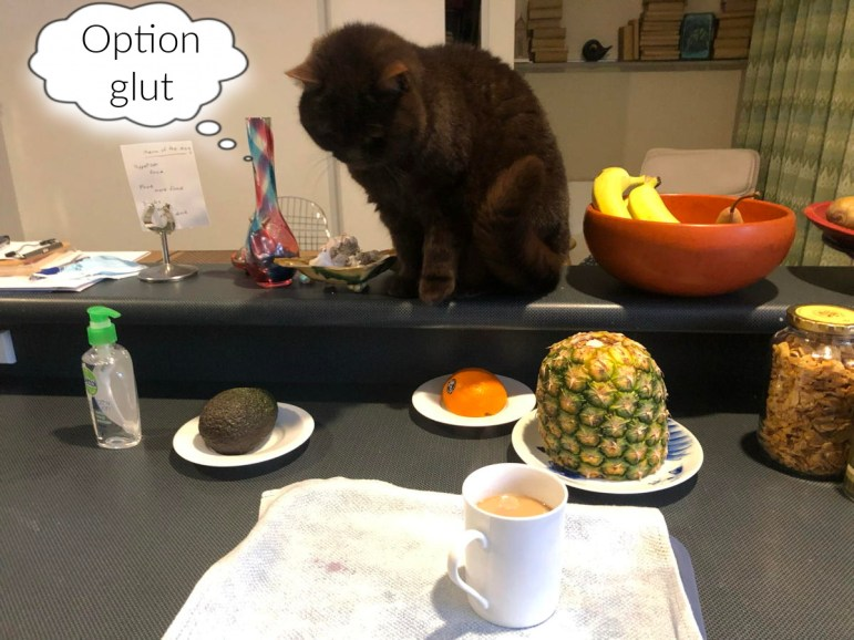 Cat contemplates kitchen bench with garlic, banana, pear, hand sanitiser, avocado, half an orange, pineapple, cornflakes and a cup of coffee.
