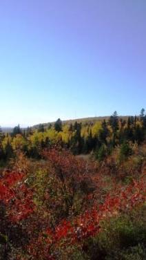 gunflint-trail-hillside-oct-2016