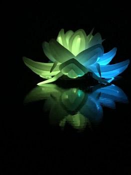 Nightfest Lotus Flower 1