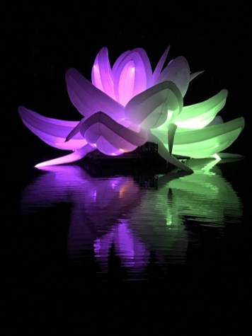 Nightfest Lotus Flower 2