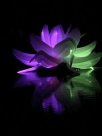 Nightfest Lotus Flower 4