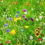 Plant a Garden: On Becoming a Word Gatherer