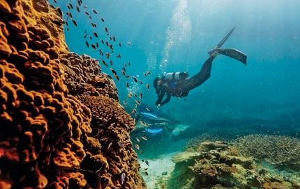 What to Do in Great Barrier Reef, Australia: 5 Exciting Activities