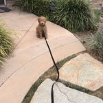 Goldendoodle Puppy Supply List 15 Essential Items The Doodle Blog