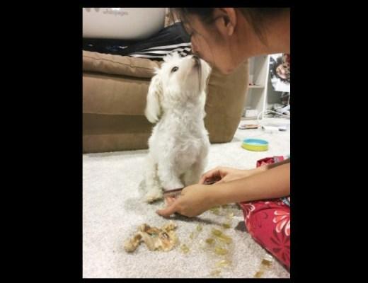 maltese love first dog