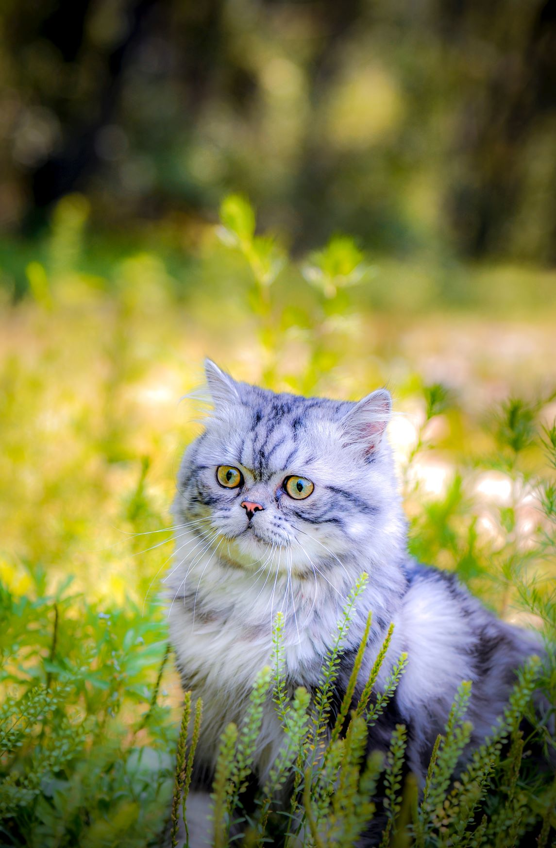 Photo by 郭 心宇 on Unsplash cat