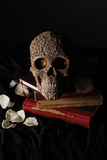 skull and books