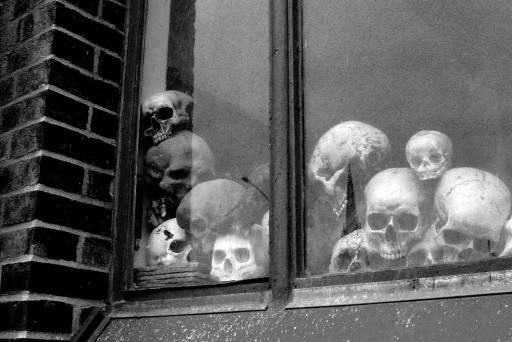 sculls in a window