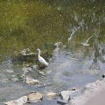Trail Duck