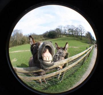 photo credit: Donkeys via photopin (license)