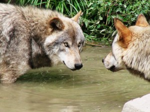 Actual Photo of Writers at the Watering Hole Image from Canstock Photo