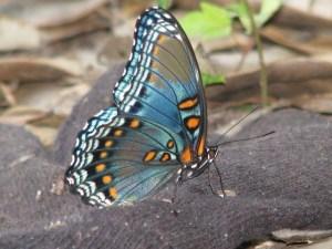 butterfly-94744_640