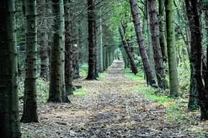 Trail through a forest