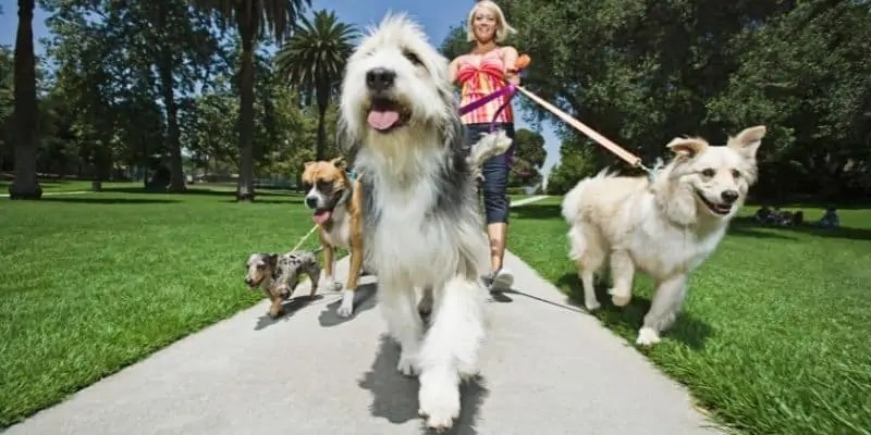 business ideas for introverts pet sitter walking dogs