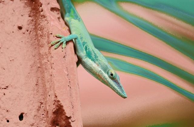 The Imaginary Lizard