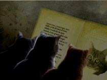 Three cats reading Alice in Wonderland