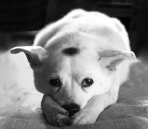 http://www.dreamstime.com/royalty-free-stock-image-sad-dog-image5373616