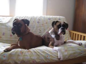 dogs_jan2012