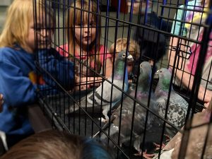 Erika Liodice author visit with racing pigeons
