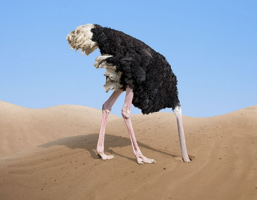 ostrich burying its head