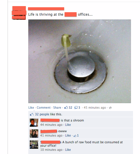 plant growing out of a sink drain