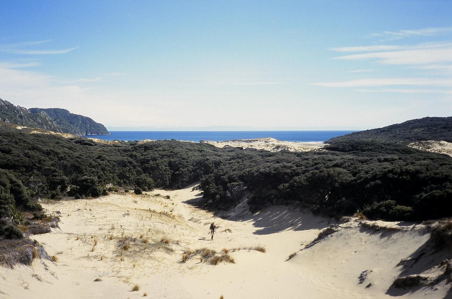 Dunes near Yankee River hut, Stewart Island
