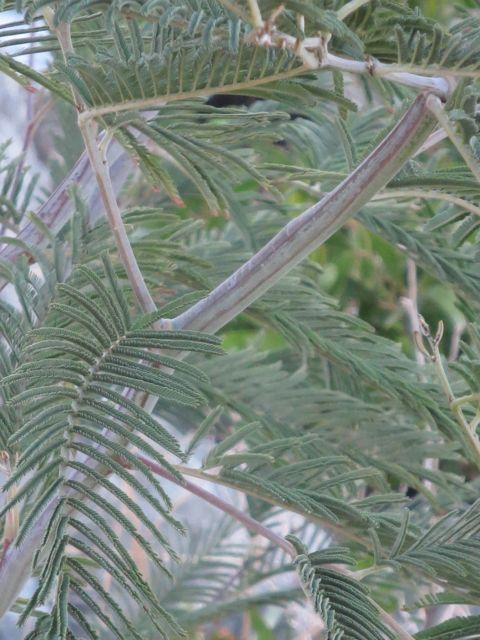 Ferny Tree 1