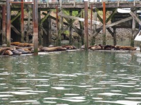 Seals on Dock