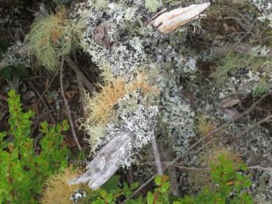 Moss 3