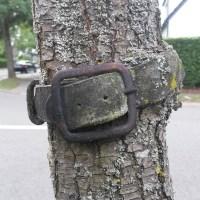 Tree 4. Collar de perro