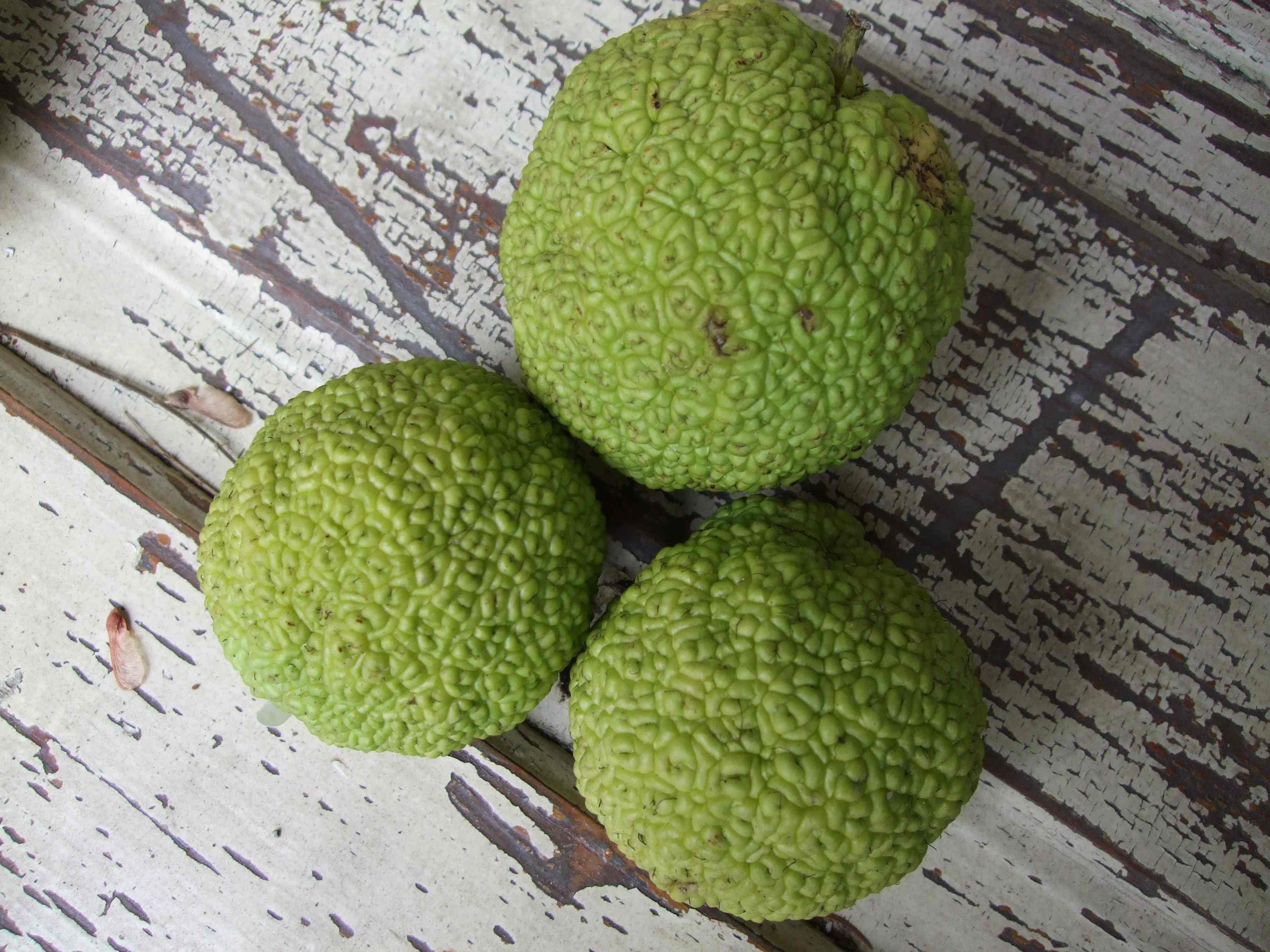 monkeyballs