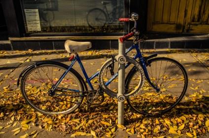 wbbike-in-autumn