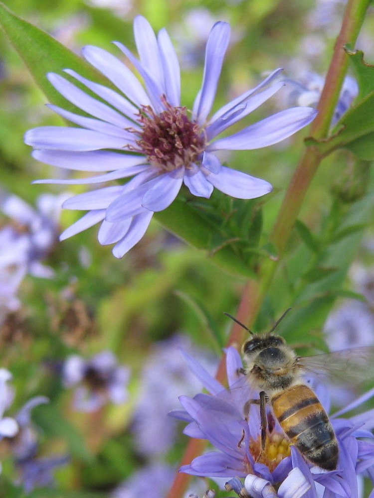 Hard-working honeybee