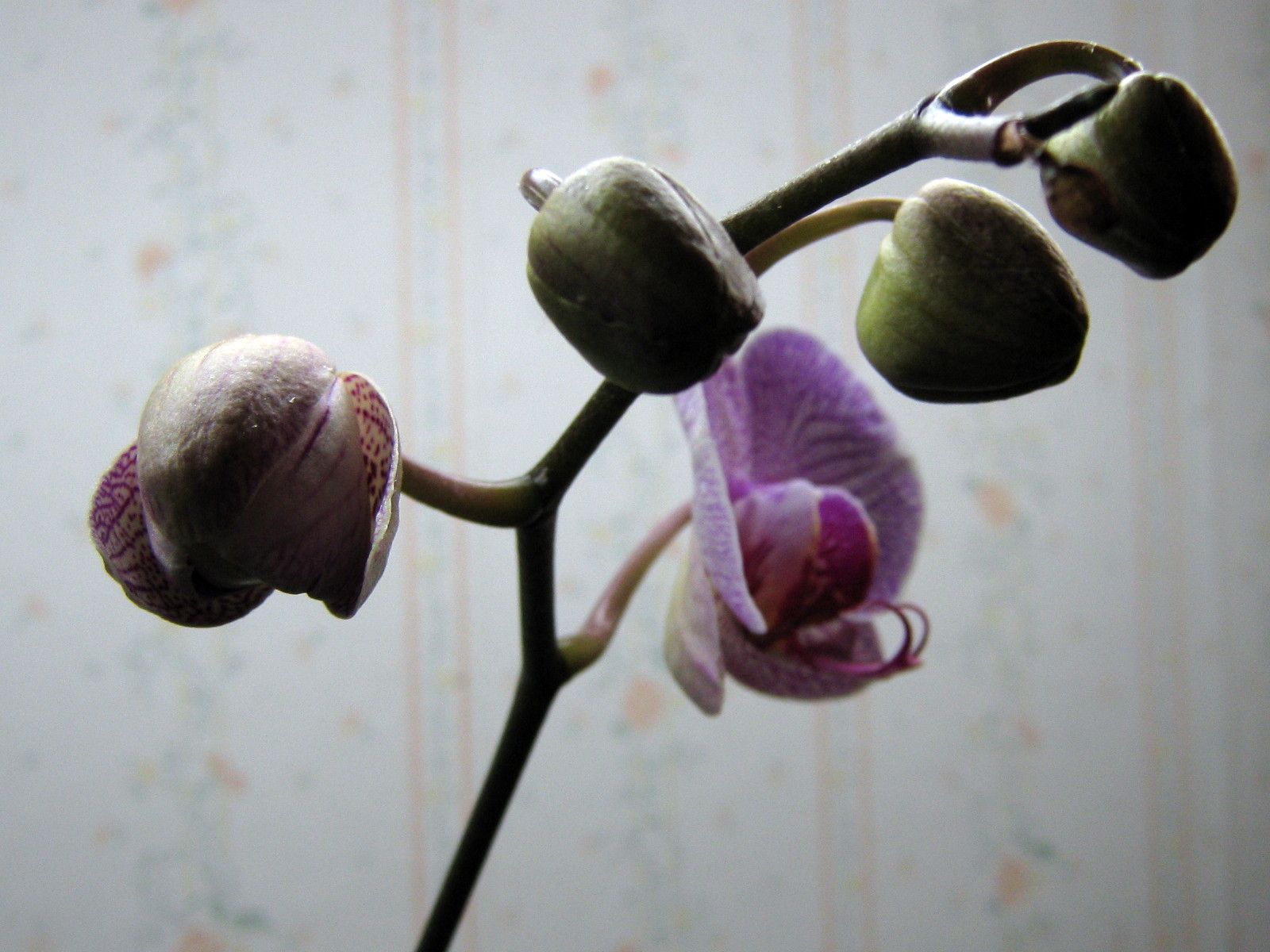 More orchids to come