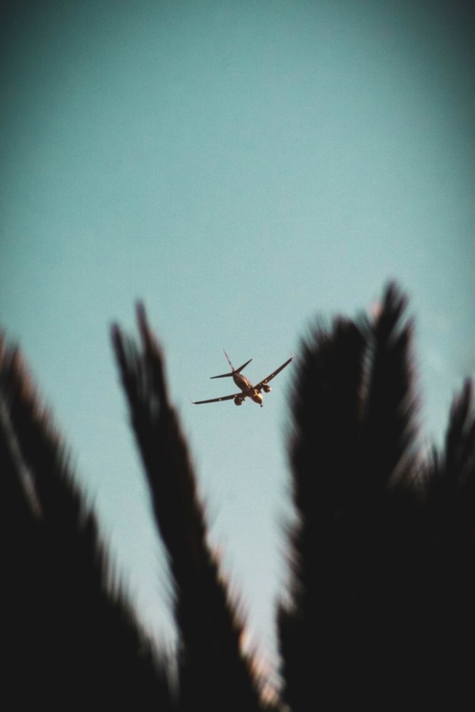 plane flying over seen through foliage