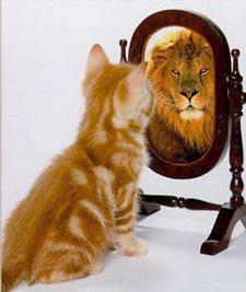 kitten to lion