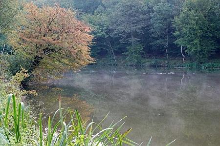 creek_woods_reeds_halfsize