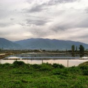 The rice fields are full of water and I can't stop taking pictures of them. I run by these often.