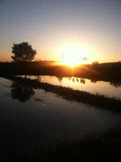 This was the sunset across the rice fields, the last night before I went to Skopje for the half marathon.