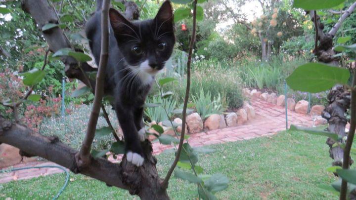 tux-climbing-tree