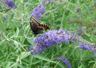 IMG_0420 Butterfly dinner